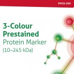 3-Colour Prestained Protein Marker (10–245 kDa)