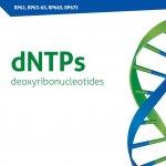 dNTPs SET 100 mM (RP675)
